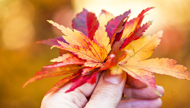 A New Look at Autumn Leaves